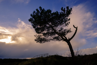 Soltairy tree on Terschelling