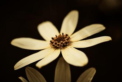 Gele bloem #2