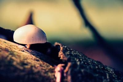 Mushroom on bark [#024]