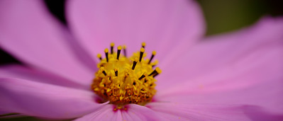 flower, cinema crop