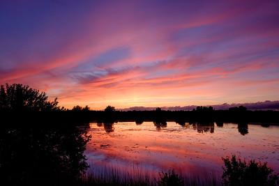 purple sunset [#014]