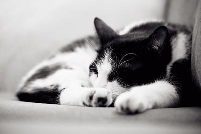 Kattenleven