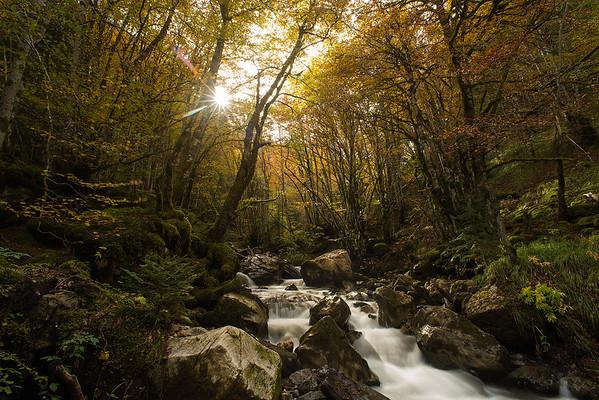 El bosque dorado
