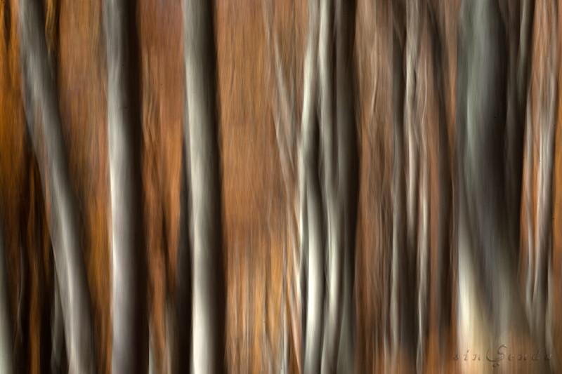 Espíritus del bosque. Gamueta II