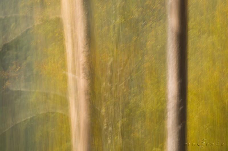 Espíritus del bosque. Oza III