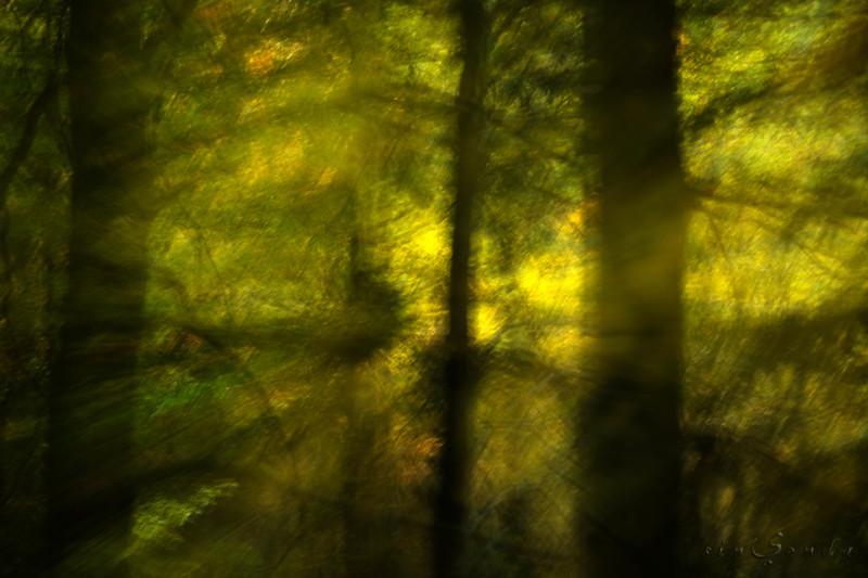 Espíritus del bosque. Ordesa IV