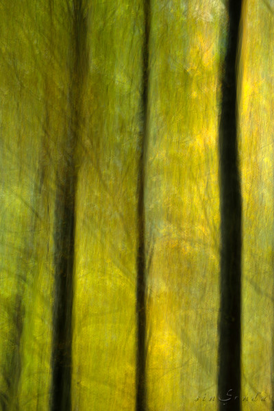 Espíritus del bosque. Ordesa V