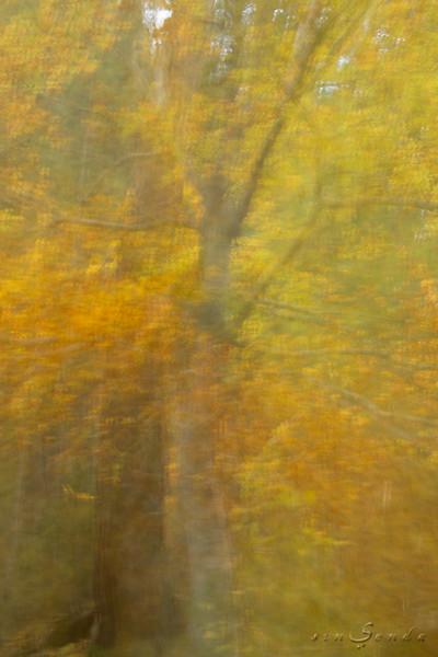 Espíritus del bosque. Oza VI