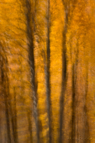 Espíritus del bosque. Gamueta I