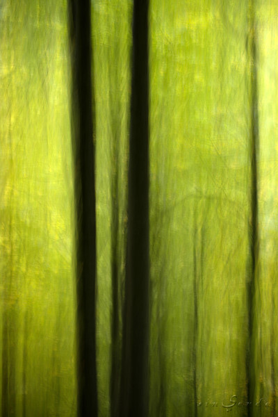 Espíritus del bosque. Ordesa VIII