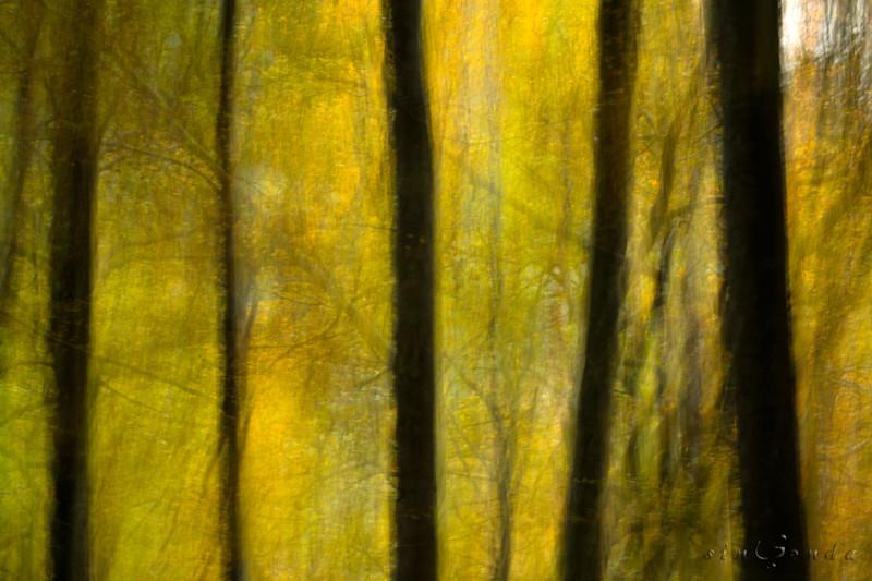 Espíritus del bosque. Ordesa II