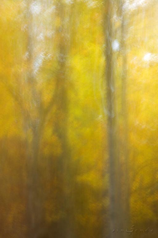 Espíritus del bosque. Oza VIII
