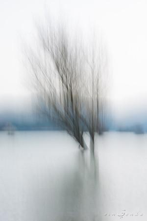 Haiku primordial III. Verso blanco, verso negro, verso azul