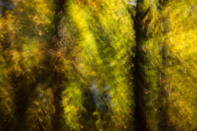 Espíritus del bosque. Oza IX