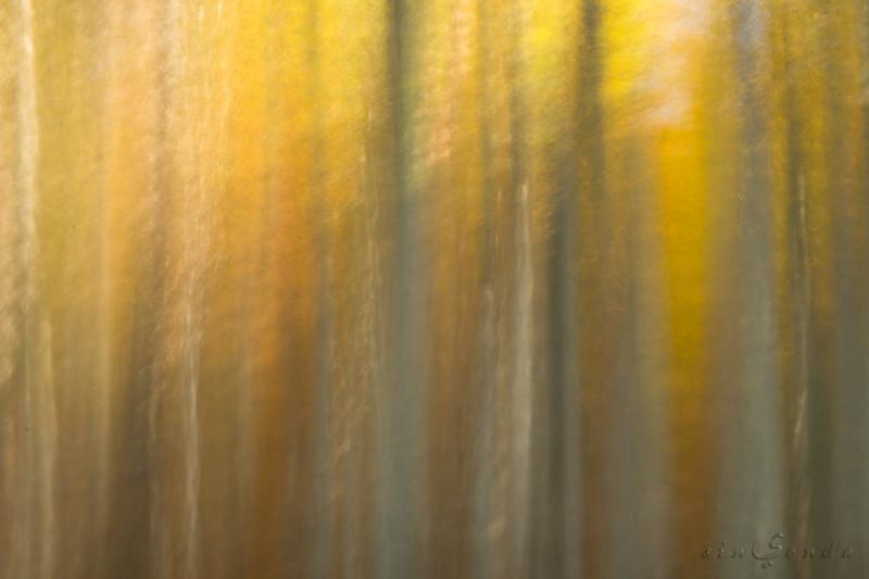 Espíritus del bosque. Oza X