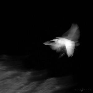 Fantasmas en el río