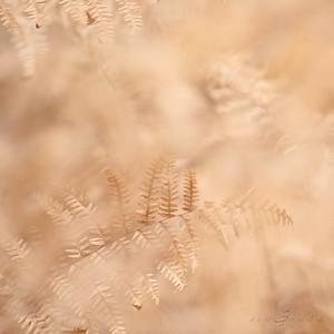 Dreamer ferns #08