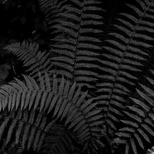 Dreamer ferns #10