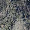 Bosques alrededor del Volcán Turrialba. Algunos árboles muestras señales de afectación por ceniza y gases. <br /> <br /> Forests around the Turrialba Volcano show signs of ash affection. <br /> <br /> 1 Noviembre 2014