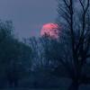 Kwietniowy, mglisty wschód słońca
