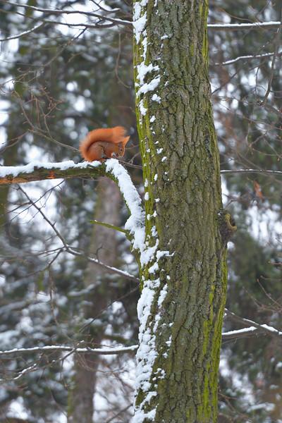 W śnieżnym plenerze