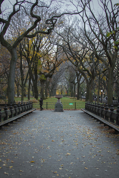 Central Park when the leaves fall