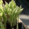 Plantjes van de buren (400mm)