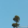 Plantje op een flat heel ver weg (400mm)