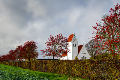 Efterårsfarver ved Hornbæk nov 2015