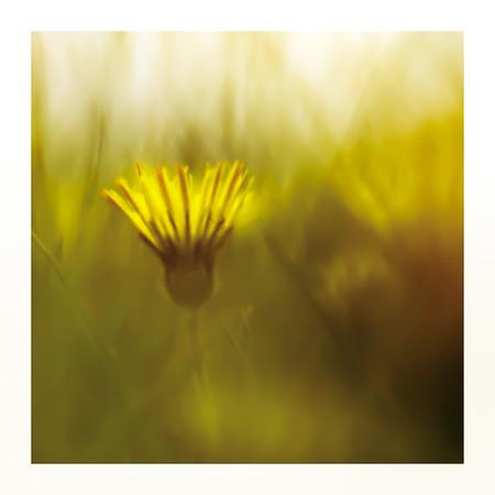 På maven i græsset maj/juni 2012