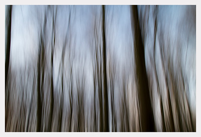 Skoven ved Hørshom dec 2011