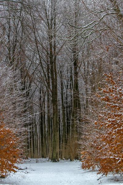 Vinter i Rudeskov Februar 2013