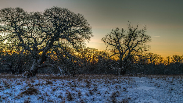 Vintermorgen i Dyrehaven dec 2014