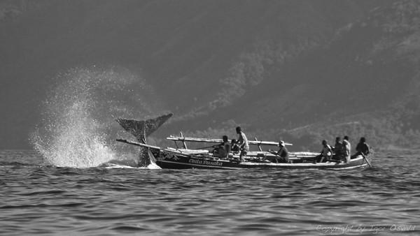 Lamalera, Lembata Island, Indonesia (2007)