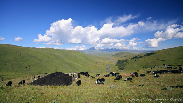 Tagong Grasslands, Kham, Tibet/Kitajska (2010) - Pogled na veliko dvorišče tibetanskih nomadov.