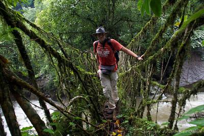 Cherrapunjee, Meghalaya, Indija (2008) - Naravni mostovi iz zračnih korenin omogočajo prebijanje čez reke in hudournike najbolj deževnega kraja na tem planetu.