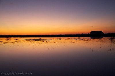 Siwa Oaza, Egipt (2011) - Lahko noč voda, lahko noč puščava!