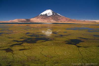 Chungará, Čile (2009) - Eden izmed mnogih čilskih lepotcev. V deželi seizmičnega plesa nikoli ne stojiš na trdnih tleh.