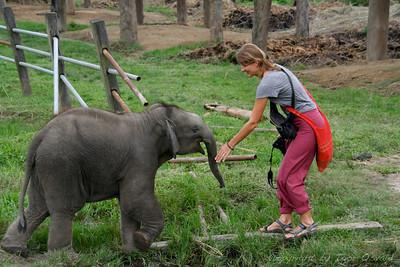 Chitwan, Nepal (2008) - Še en hoče posesati Dominiko!