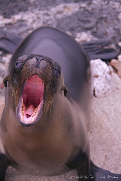 Santa Fe, Galapagos, Ekvador (2009)