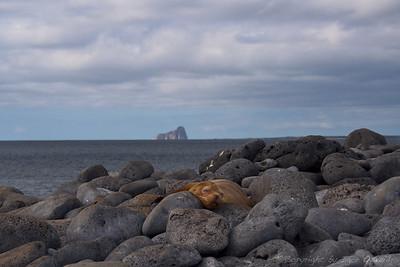 San Cristobal, Galapagos, Ekvador (2009)