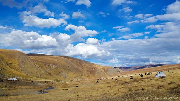 Tibetanska planota (2010)