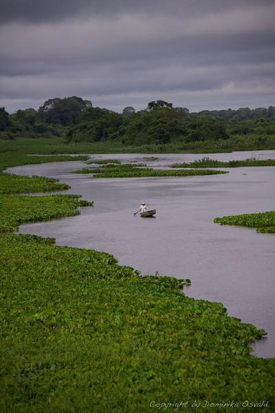Pantanal, Brazilija (2010)
