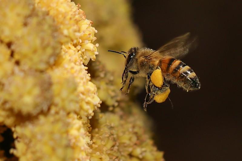 Platz_02_7,09_K1600_04_Uwe_Schebek_Fleißige Biene