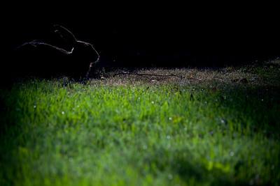 Puutarhurin painajainen / Gardener's nightmare