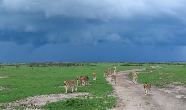 På väg till Zebra mat