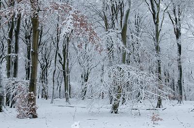 2008 11 24 Beuken sneeuw 008