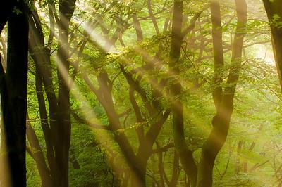 2007 07 23 Beukenbos in tegenlicht  010