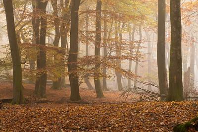 GR 31 10 2015 Herfst beuken sfeer 001