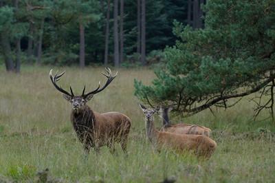 2012-09-14 Herten Bronst 011